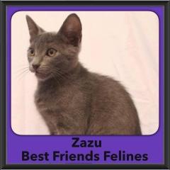 2016-Adopted-Zazu