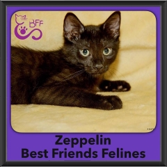 2016-Adopted-Zeppelin