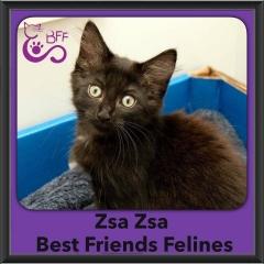 2016-Adopted-Zsa-Zsa