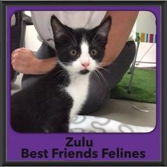 2016-Adopted-Zulu