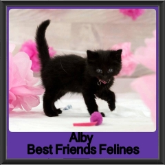 2017 - Adopted - Alby