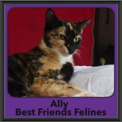 2017 - Adopted - Ally
