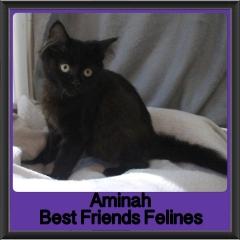 2017 - Adopted - Aminah