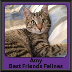 2017 - Adopted - Amy