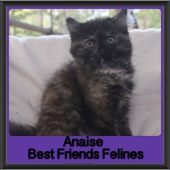 2017 - Adopted - Anaise