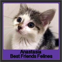 2017 - Adopted - Anastasia