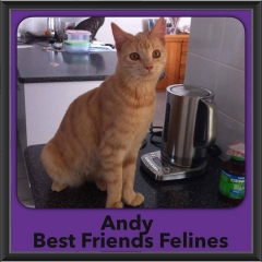 2017 - Adopted - Andy (2)