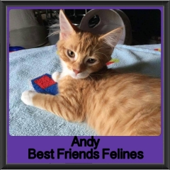 2017 - Adopted - Andy