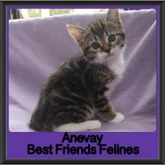 2017 - Adopted - Anevay