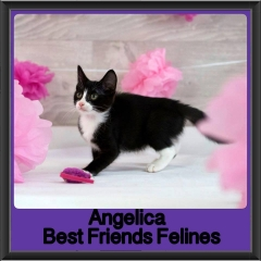 2017 - Adopted - Angelica