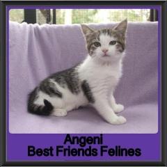 2017 - Adopted - Angeni