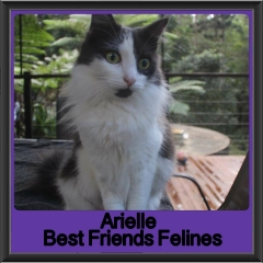 2017 - Adopted - Arielle