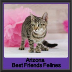 2017 - Adopted - Arizona