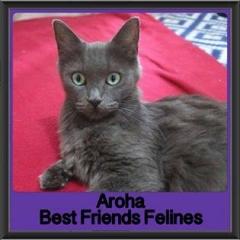 2017 - Adopted - Aroha