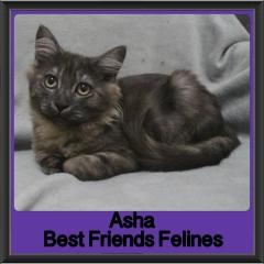 2017 - Adopted - Asha (2)