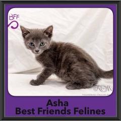 2017 - Adopted - Asha