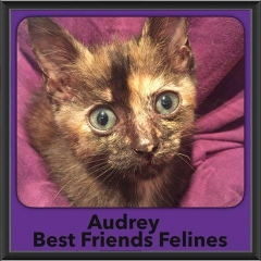 2017 - Adopted - Audrey