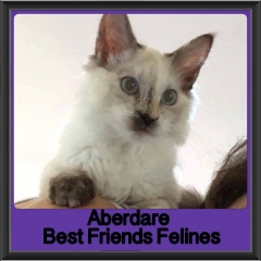 2017 - Adopted - Averdare