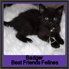 2017 - Adopted - Badger