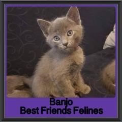 2017 - Adopted - Banjo