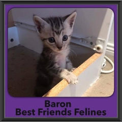 2017 - Adopted - Baron