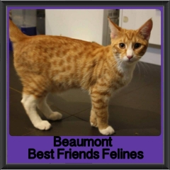 2017 - Adopted - Beaumont