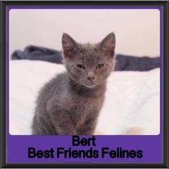 2017 - Adopted - Bert