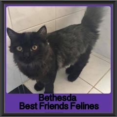 2017 - Adopted - Bethesda
