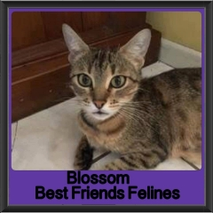 2017 - Adopted - Blossom
