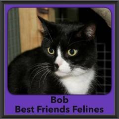 2017 - Adopted - Bob
