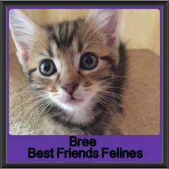 2017 - Adopted - Bree