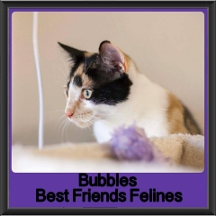 2017 - Adopted - Bubbles