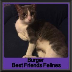 2017 - Adopted - Burger