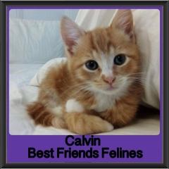 2017 - Adopted - Calvin (2)