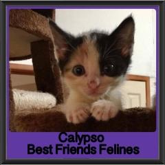 2017 - Adopted - Calypso