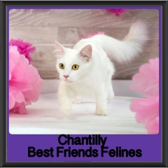 2017 - Adopted - Chantilly