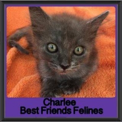 2017 - Adopted - Charles