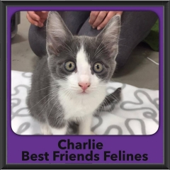2017 - Adopted - Charlie