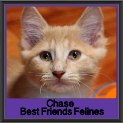 2017 - Adopted - Chase