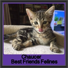 2017 - Adopted - Chaucer