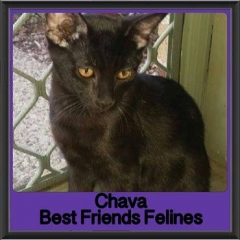 2017 - Adopted - Chava