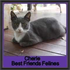 2017 - Adopted - Cherie