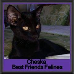 2017 - Adopted - Cheska