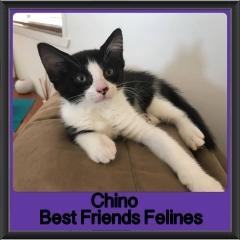 2017 - Adopted - Chino