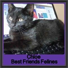 2017 - Adopted - Chloe