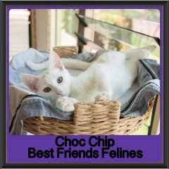 2017 - Adopted - Choc chip