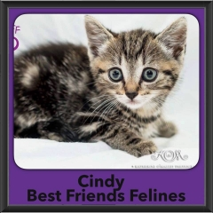 2017 - Adopted - Cindy