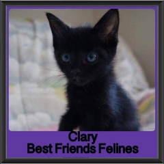 2017 - Adopted - Clary