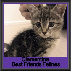 2017 - Adopted - Clementine