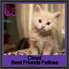 2017 - Adopted - Cloud